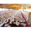 Poultry Farms (19)