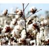 Cotton & textile Industries - Libra Scales (27)